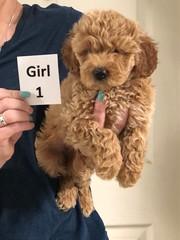 Noel Girl 1 pic 3 5-21
