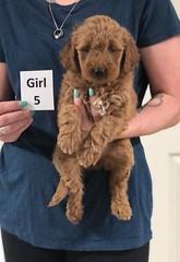 Noel Girl 5 5-21