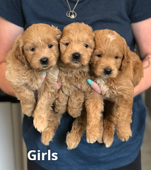 Cindy Girls 5-21