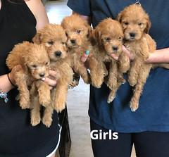 Belle Girls 5-21
