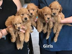 Belle Girls pic 4 5-21