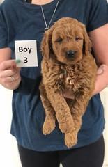 Noel Boy 3 pic 3 5-21