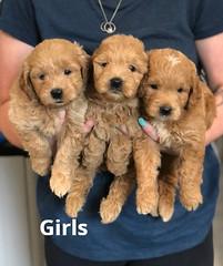 Cindy Girls pic 2 5-21