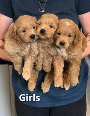 Cindy Girls pic 3 5-21