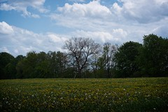 Landscape between the lakes   May 21, 2021   Belau - Plön District - Schleswig-Holstein - Germany
