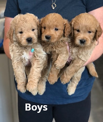 Cindy Boys pic 4 5-21