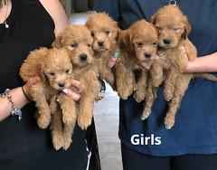 Belle Girls pic 3 5-21