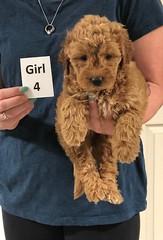 Noel Girl 4 5-21