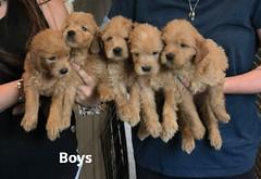 Belle Boys 5-21