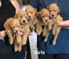 Belle Girls pic 2 5-21