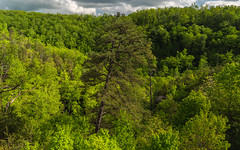 Spring in the Red River Gorge