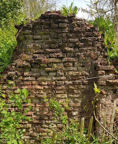 Stenen muur ruine met Muurleeuwebek
