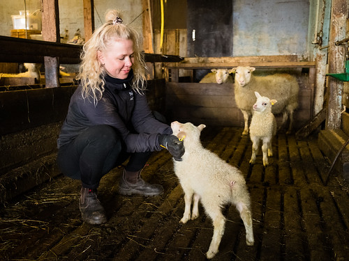 """Lambing season • <a style=""""font-size:0.8em;"""" href=""""http://www.flickr.com/photos/22350928@N02/51199139050/"""" target=""""_blank"""">View on Flickr</a>"""