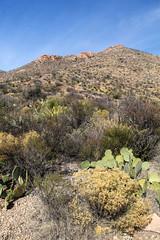 Desert View Estates