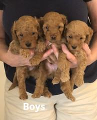 Georgie Boys pic 3 5-22