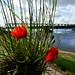 Loire-Authion, Maine-et-Loire, France
