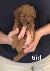 Georgie Girl 5-22