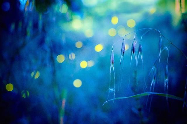 Biophotons - the glimmer of life: Biophotonen