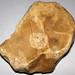 Fossiliferous chert (Chatham, Ohio, USA) 1