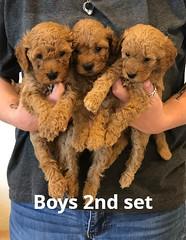 Georgie Boys 2nd set pic 3 5-28