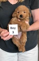 Cindy Boy 3 pic 4 5-28