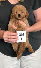Cindy Girl 1 pic 4 5-28