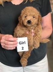 Cindy Girl 2 pic 2 5-28