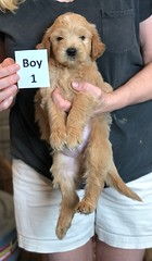 Belle Boy 1 pic 3 5-28
