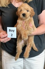 Belle Boy 2 pic 2 5-28
