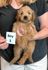 Belle Boy 3 5-28