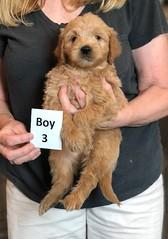 Belle Boy 3 pic 2 5-28