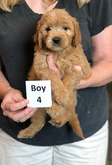 Belle Boy 4 5-28