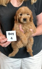 Belle Boy 4 pic 3 5-28