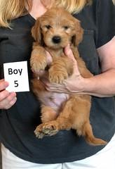Belle Boy 5 5-28