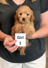 Belle Girl 1 pic 3 5-28