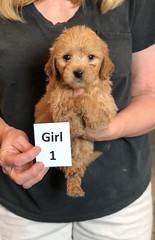 Belle Girl 1 pic 4 5-28