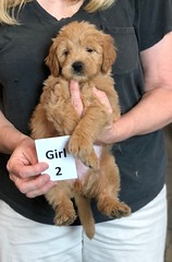 Belle Girl 2 5-28