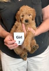 Belle Girl 2 pic 4 5-28