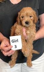 Belle Girl 3 pic 3 5-28