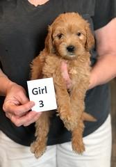 Belle Girl 3 pic 4 5-28