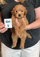 Belle Girl 5 pic 4 5-28