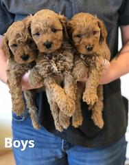 Georgie Boys pic 3 5-28