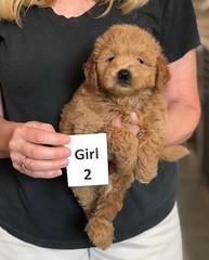 Cindy Girl 2 pic 3 5-28