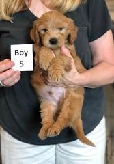 Belle Boy 5 pic 4 5-28