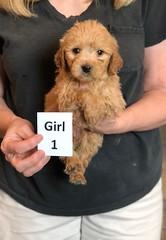 Belle Girl 1 pic 2 5-28