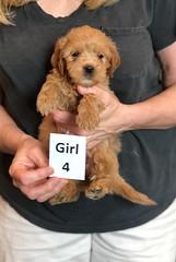 Belle Girl 4 pci 3 5-28