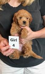Belle Girl 4 pic 2 5-28