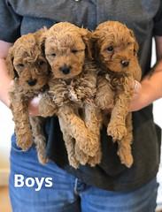 Georgie Boys pic 2 5-28