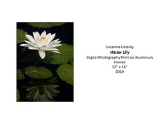 """Water Lily • <a style=""""font-size:0.8em;"""" href=""""http://www.flickr.com/photos/124378531@N04/51208768796/"""" target=""""_blank"""">View on Flickr</a>"""