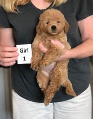 Cindy Girl 1 pic 2 5-28